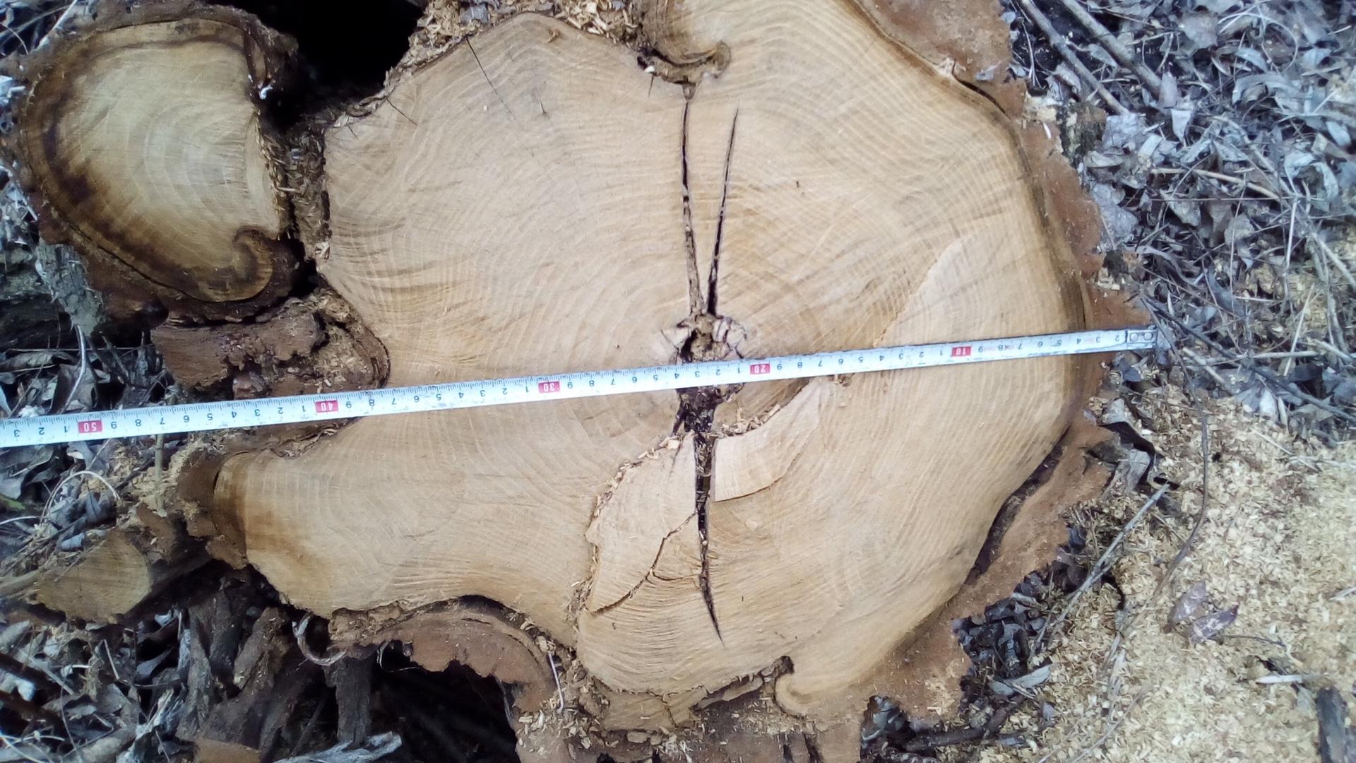НЕЗАКОННЫЙ спил деревьев | Прихист