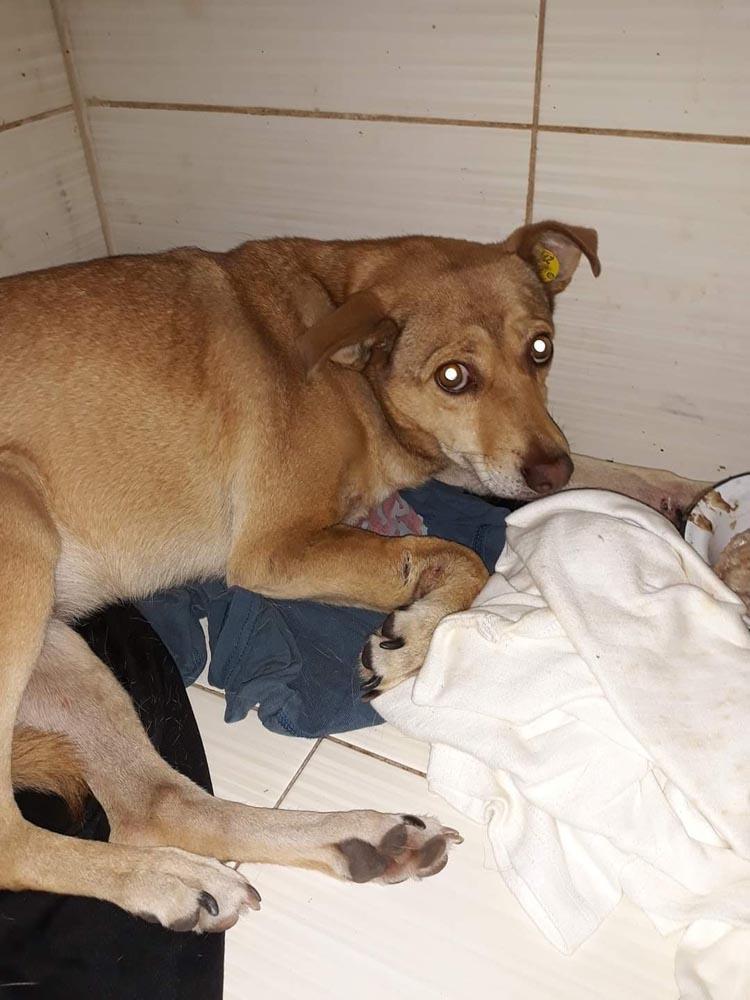 В Никополе не смогли спасти жизнь собаке, застрявшей между гаражей   Прихист