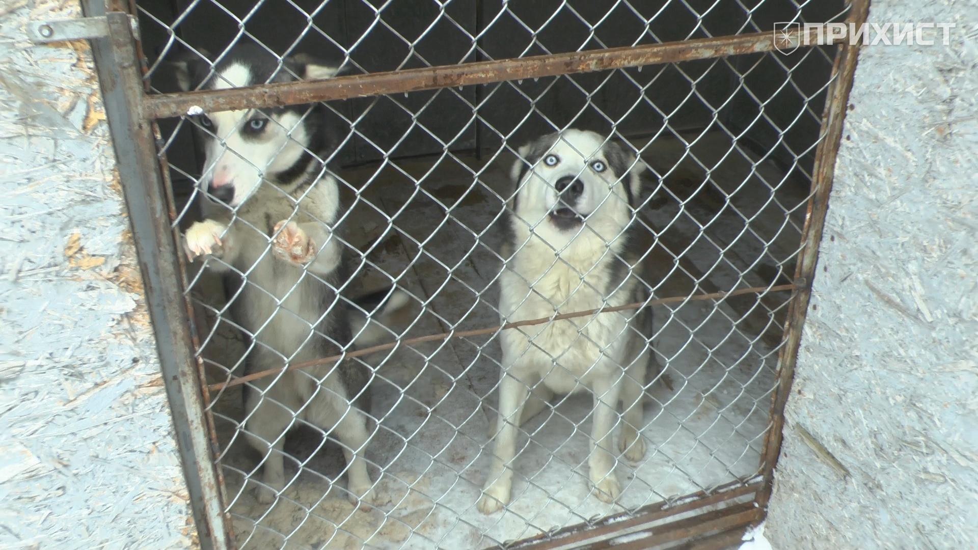 Холод собачий: как животные переживают зиму | Прихист