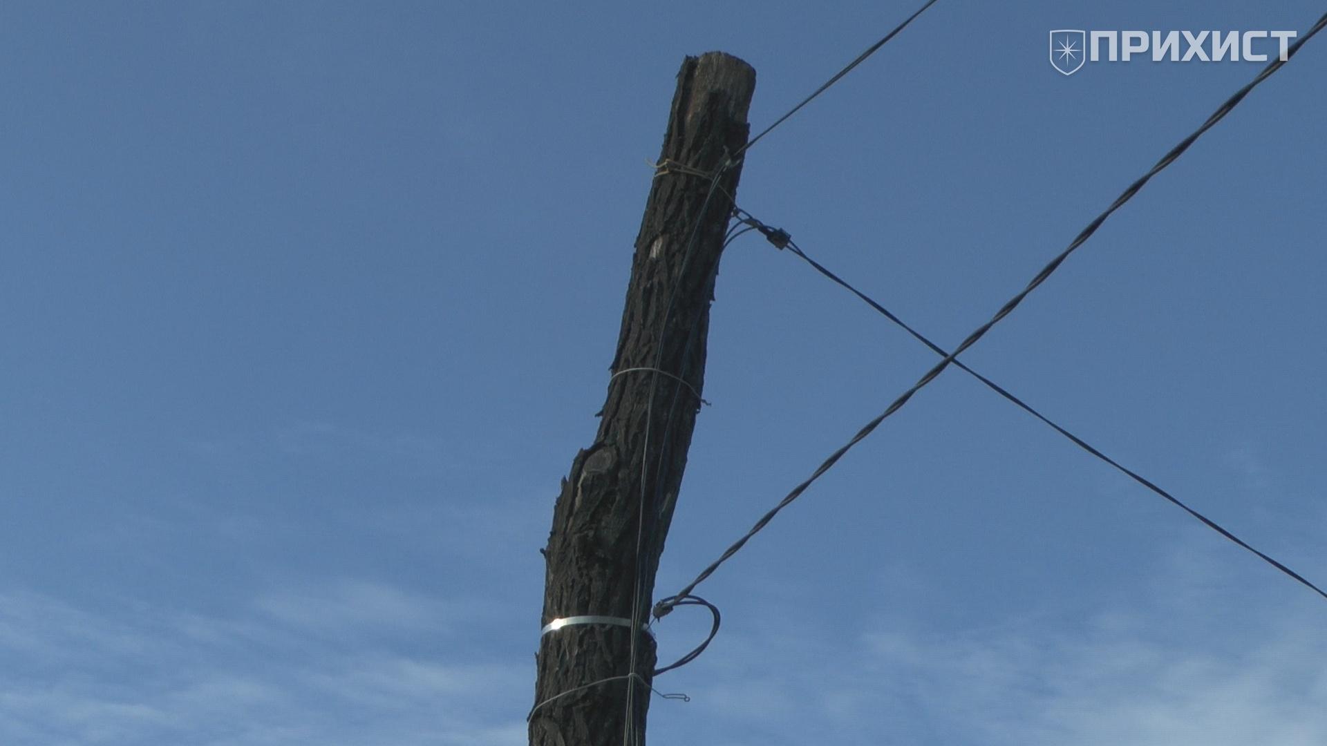 В Никополе используют деревья в качестве электроопор | Прихист