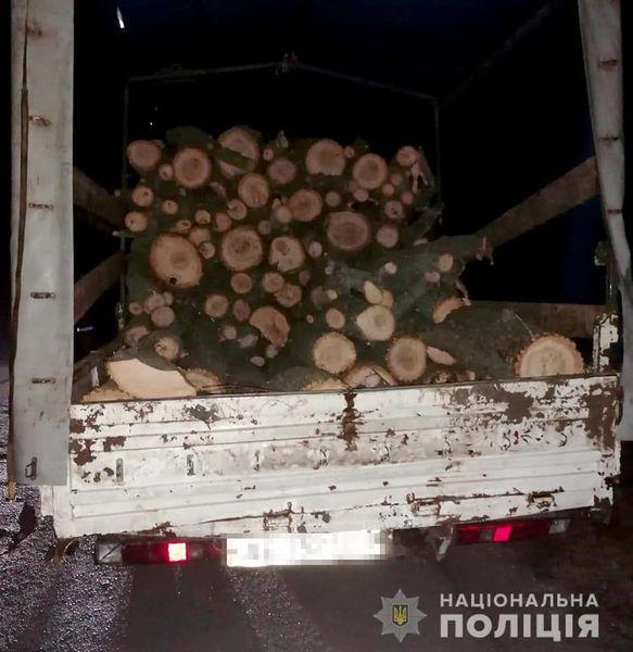 В Никопольском районе незаконно спилили 14 деревьев | Прихист