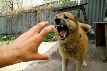 Владельцам собак, которые покусали мужчину в Червоногригоровке, выписали админпротокол   Прихист