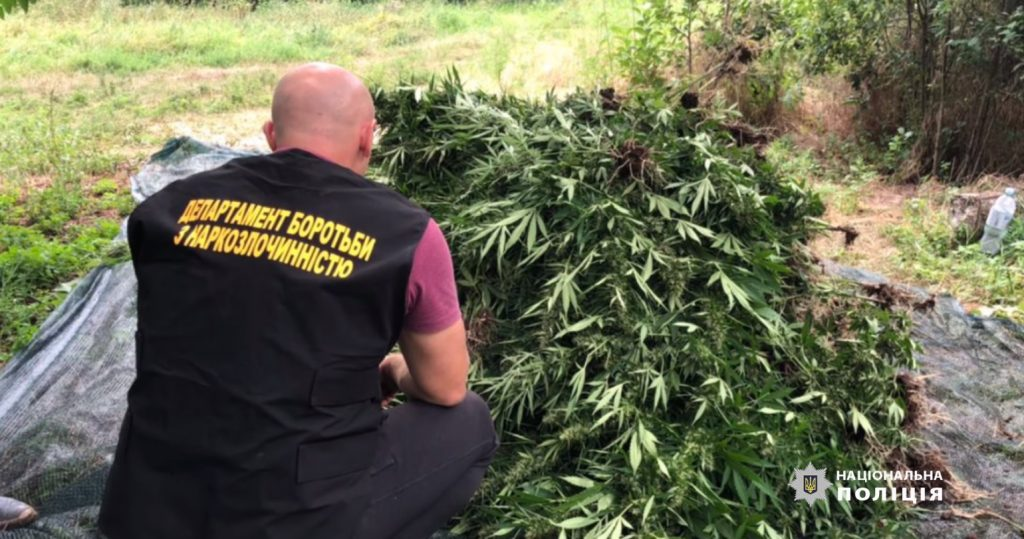 Полиция Днепропетровской области обнаружила и ликвидировала более трех тысяч кустов конопли | Прихист