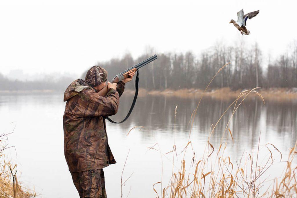 В Днепропетровской области стартует сезон охоты на пернатую дичь: запреты и особенности | Прихист